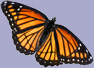 Butterfly - Orange