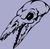 Skull 55 Decal