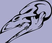 Skull 51 Decal