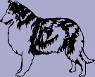 Dog Breed Decal - Collie