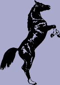 Horse Decal 1