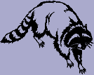 Animal Decal - Raccoon